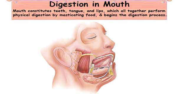 Digestion in Mouth